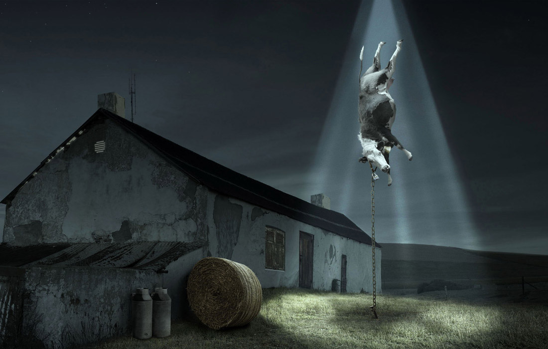 krowa ufo