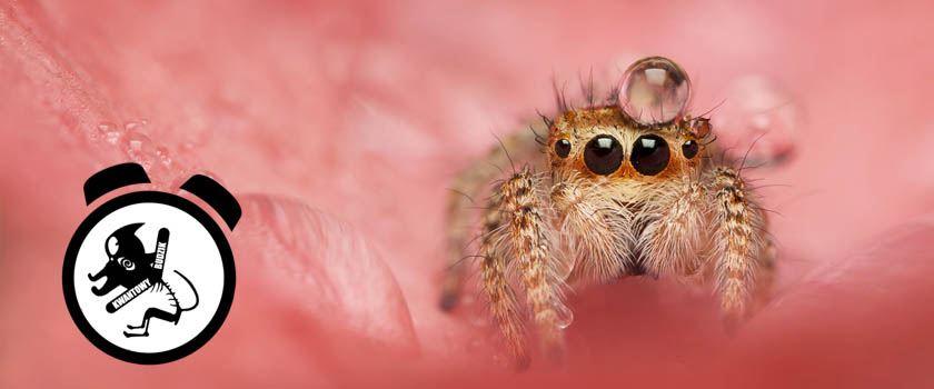 KB #19: 107 milionów pająków? Nope, nope,nope…