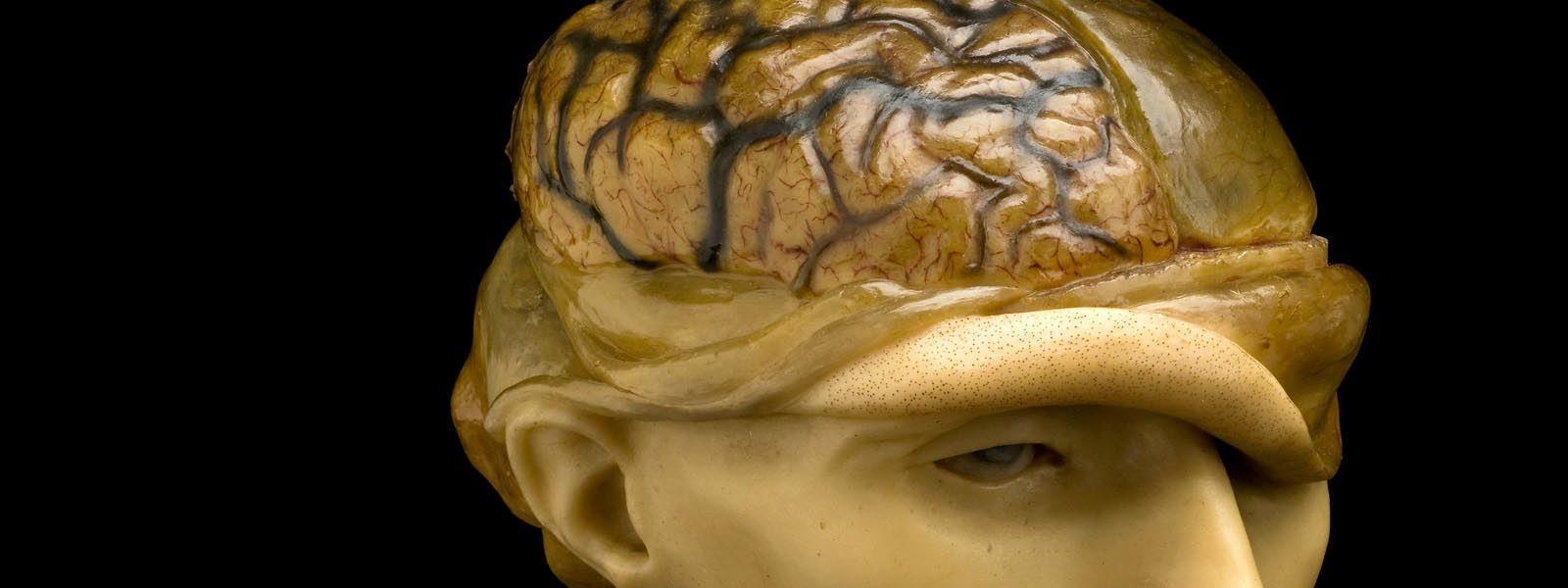 Niezwykłe perypetie mózgu Alberta Einsteina