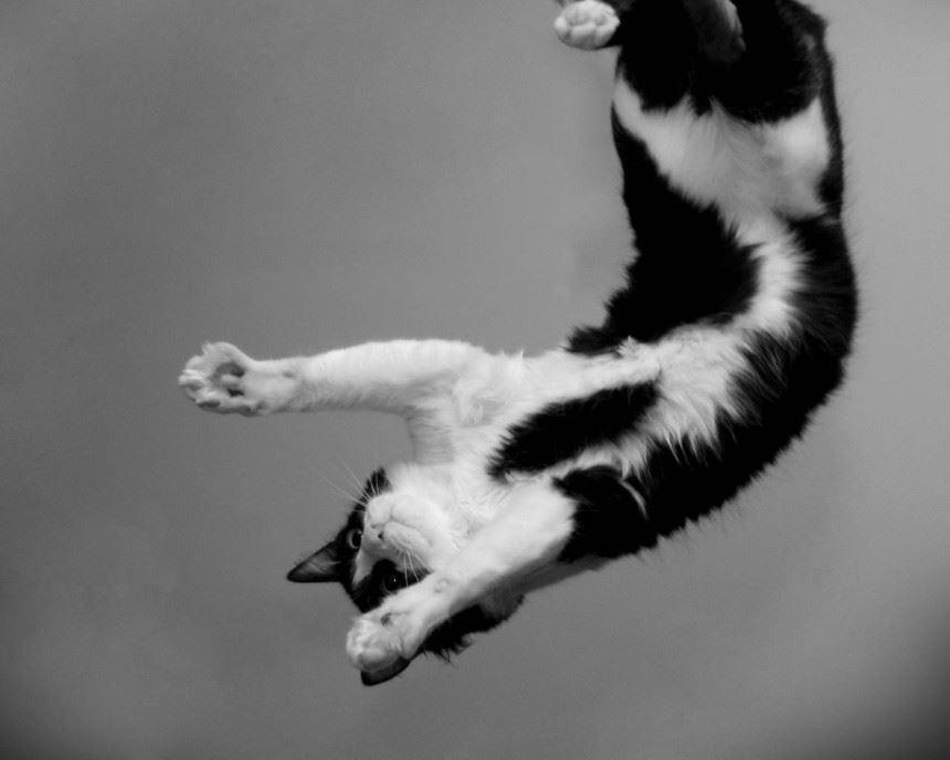 Fizyka spadającego kota