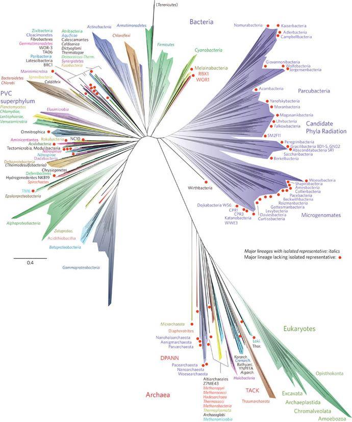 Najnowsze drzewo organizmów, biologów zBerkeley