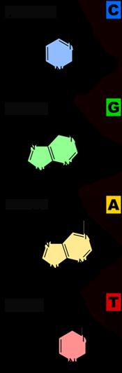 alfabet zycia3