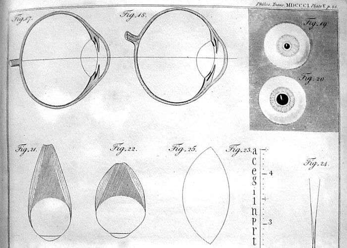 Thomas Young, On the mechanism of the eye