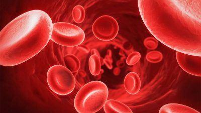 TL;DR: Czy krew reaguje na magnes?