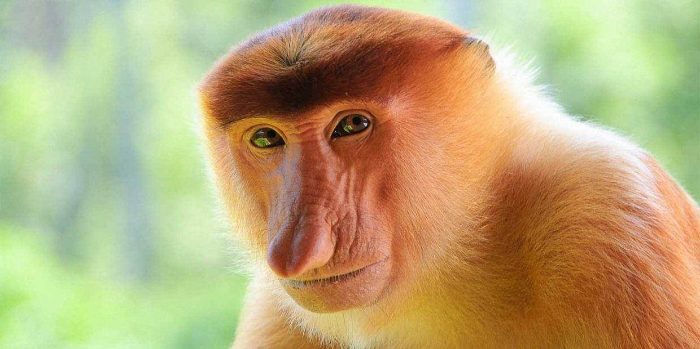 TL;DR: Czy człowiek pochodzi od małpy?
