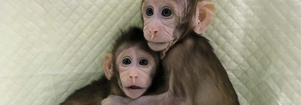 Małpy sklonowane wChinach