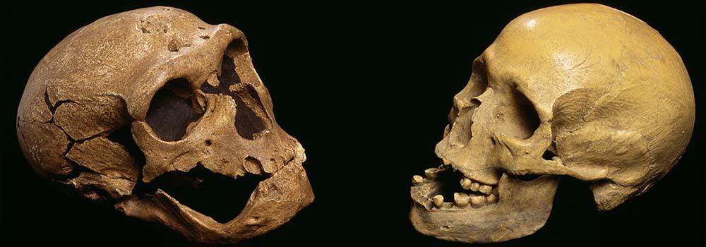 Mózg neandertalczyka