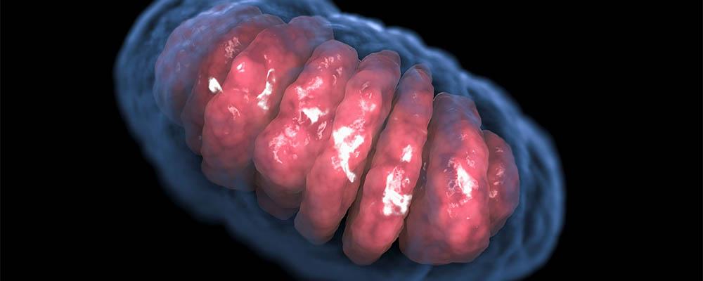 Mitochondrium komórkowe