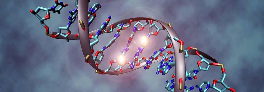 Hachimoji DNA