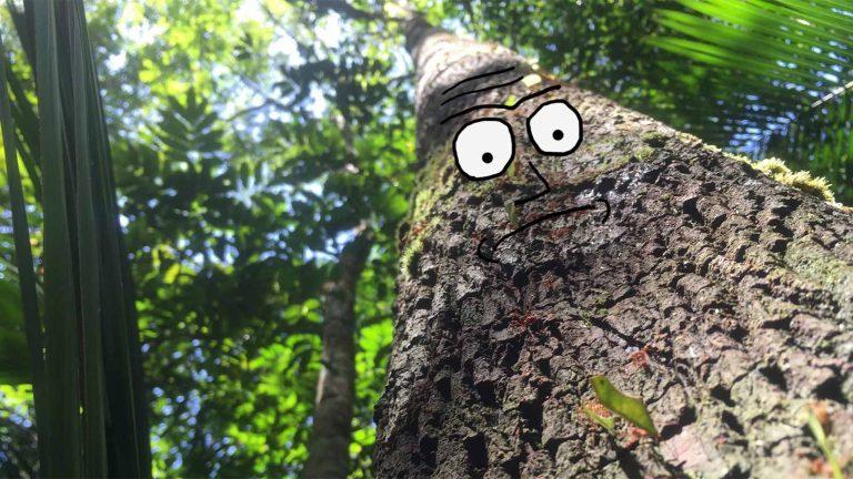 TL;DR: Dlaczego amazońskie lasy są takważne?