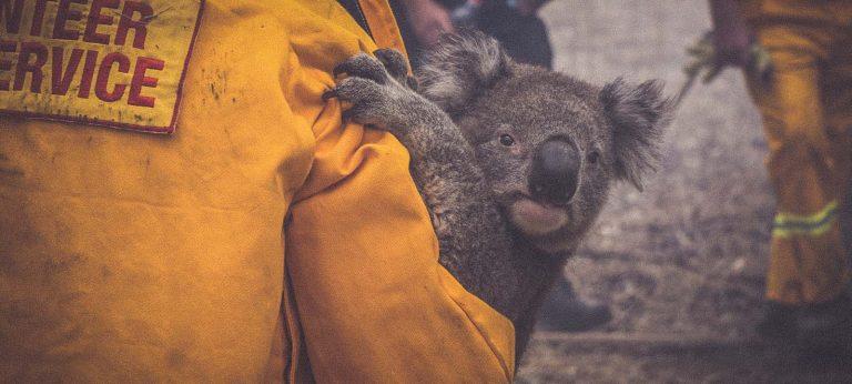 5 rzeczy, które powinieneś wiedzieć o pożarach w Australii