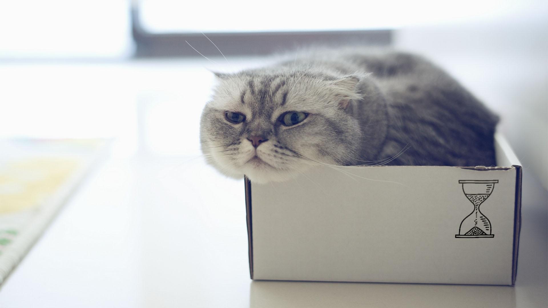 kot transakcyjna