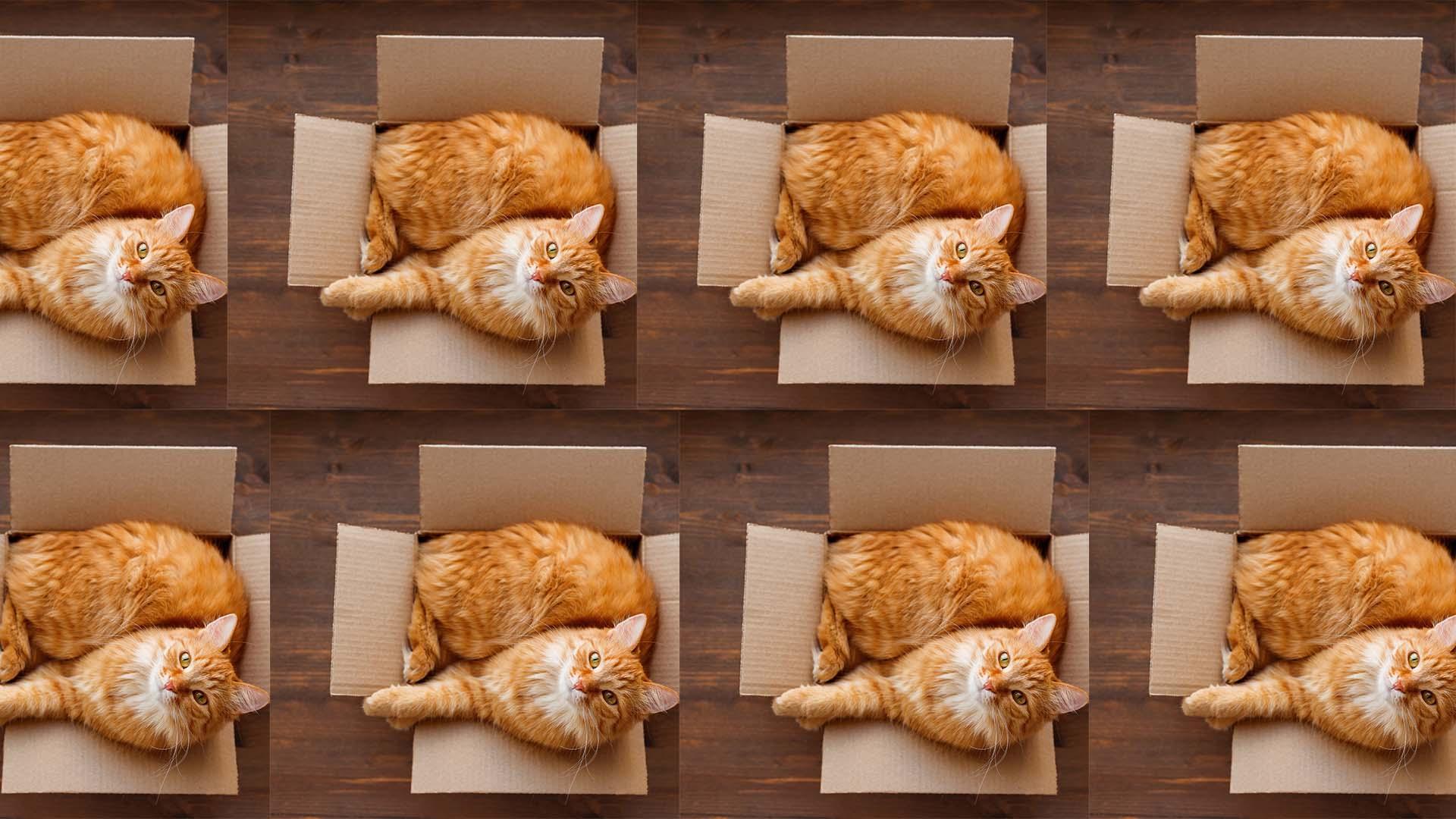kot wieloswiat