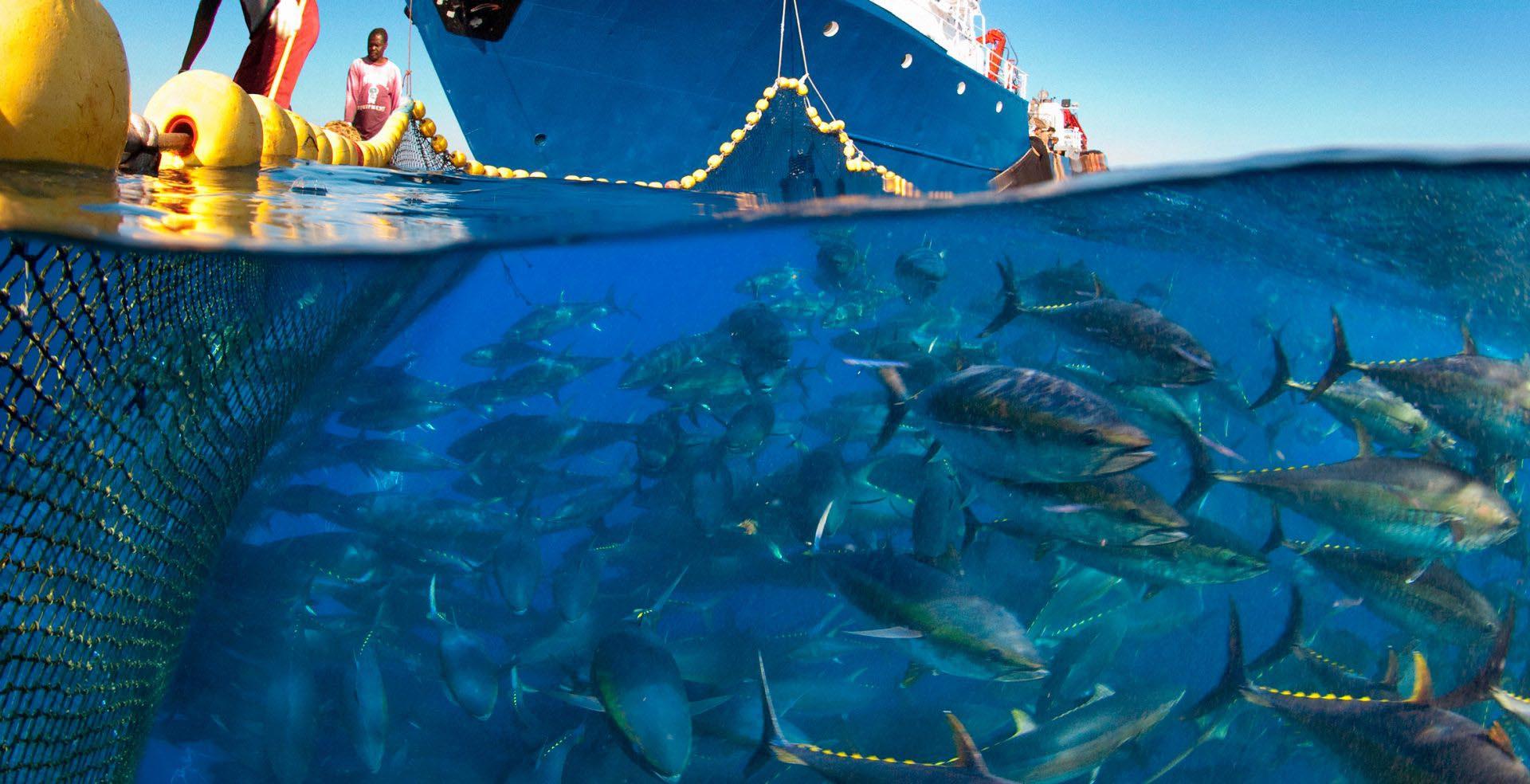 Ciemne strony rybołówstwa
